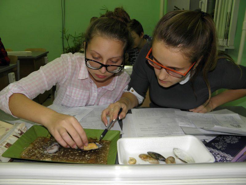 Изучаем мидий и осьминогов. Фото Л.Г. Целищевой