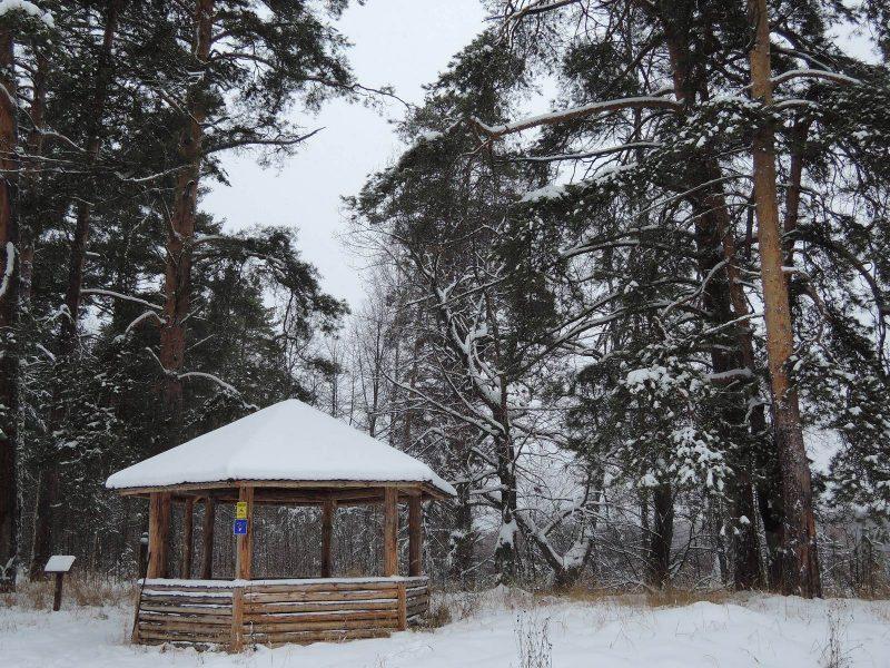 Беседка в охранной зоне на берегу озера Старица. Фото Е. М. Тарасовой
