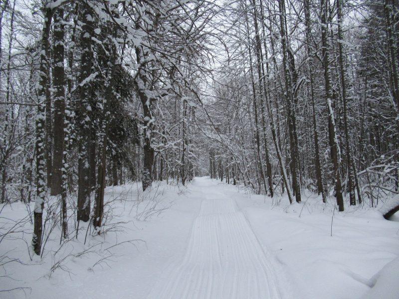Учётный маршрут. Фото С.В. Кондруховой