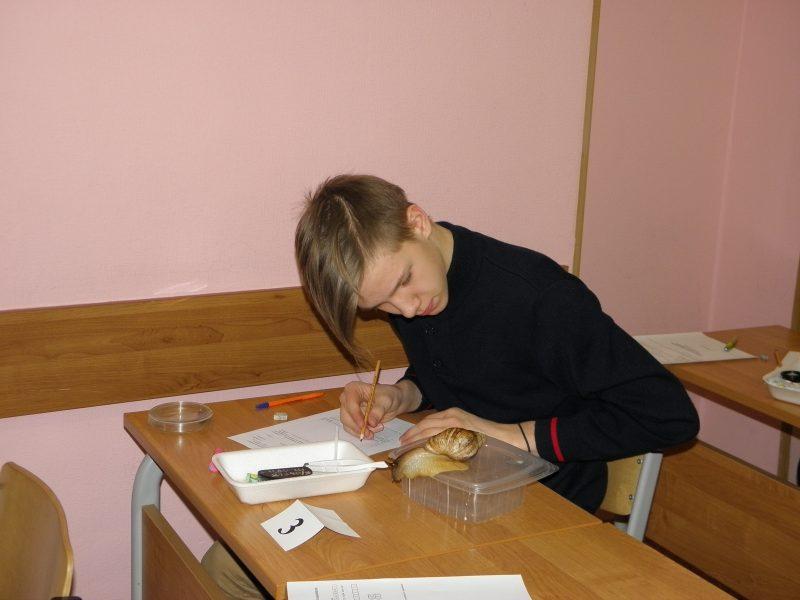 Живая ахатина - объект для изучения на олимпиаде в 9 классе. Фото Л.Г. Целищевой
