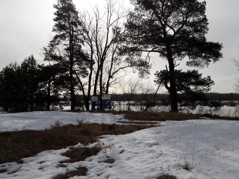 Берег озера Старица. Фото М. Н. Владыкиной