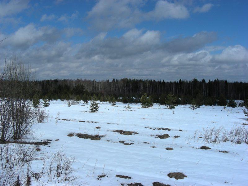 Охранная зона заповедника в апреле. Фото С. В. Кондруховой