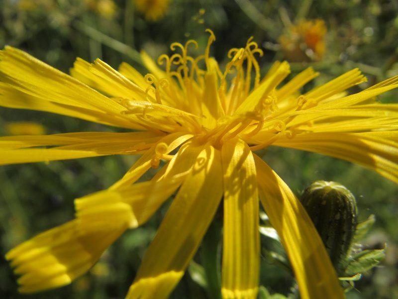 Щелкуны питаются на растениях. Фото Е.В. Рогожниковой