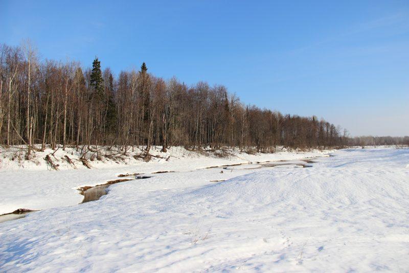 Весенний лес. Фото Е.В. Князевой