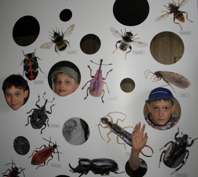 Панно с насекомыми в музее заповедника. Фото Л. Г. Целищевой
