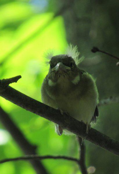 Птенец. Фото С. В. Кондруховой