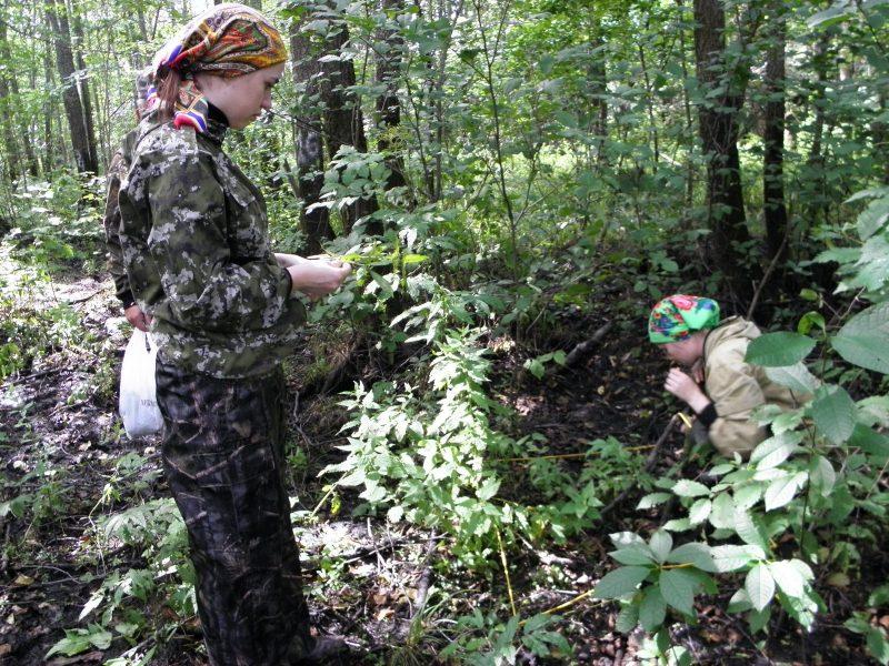 Геоботаническое описание ольшаника (ППП-7,) Фото Л. Г. Целищевой