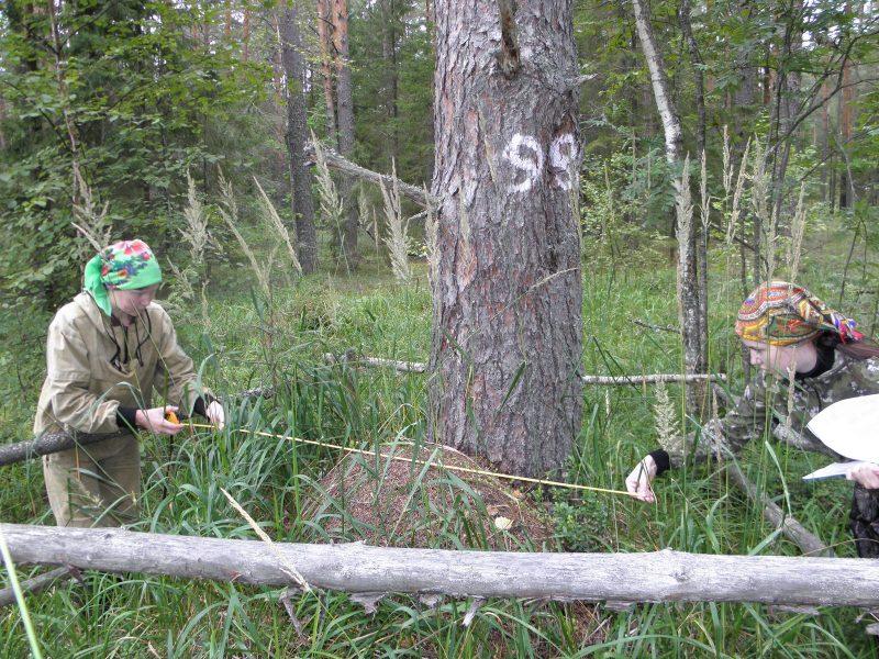 Мониторинг муравейников в охранной зоне. Фото Л.Г. Целищевой