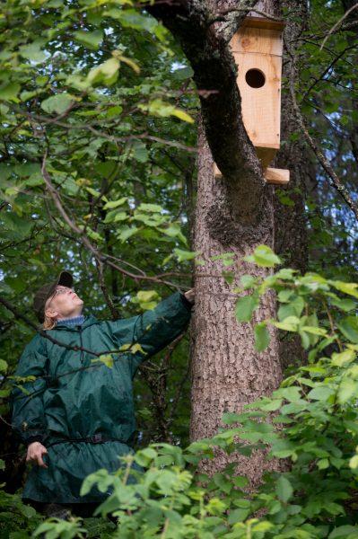 Проверка заселенности искусственных гнездовий. Фото Е.П. Ураевой