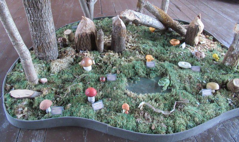 Выставка грибов. Фото Л. Г. Целищевой