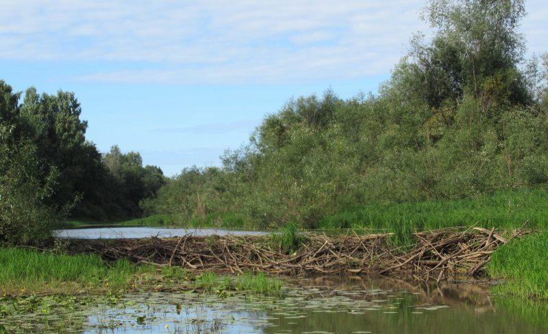Одна из самых крупных плотин в заповеднике. Фото Е. М. Тарасовой