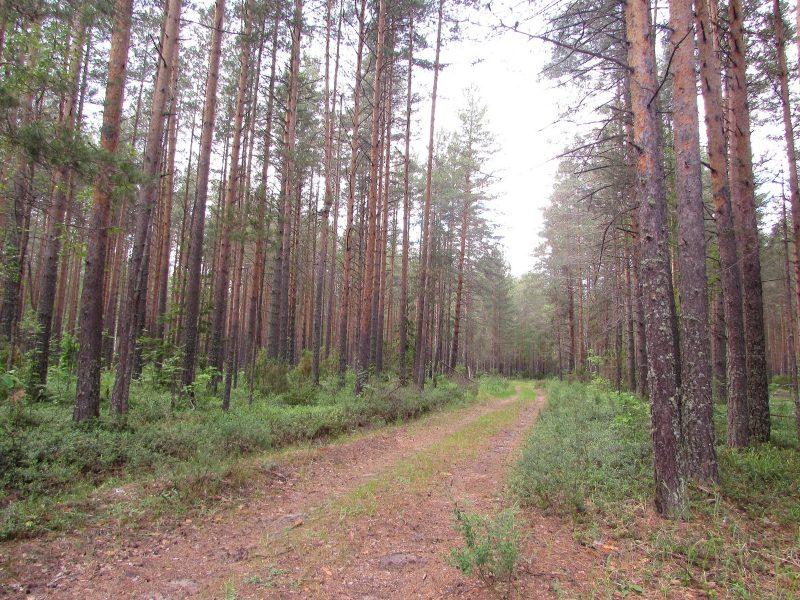 Охранная зона. Фото Е. В. рогожниковой
