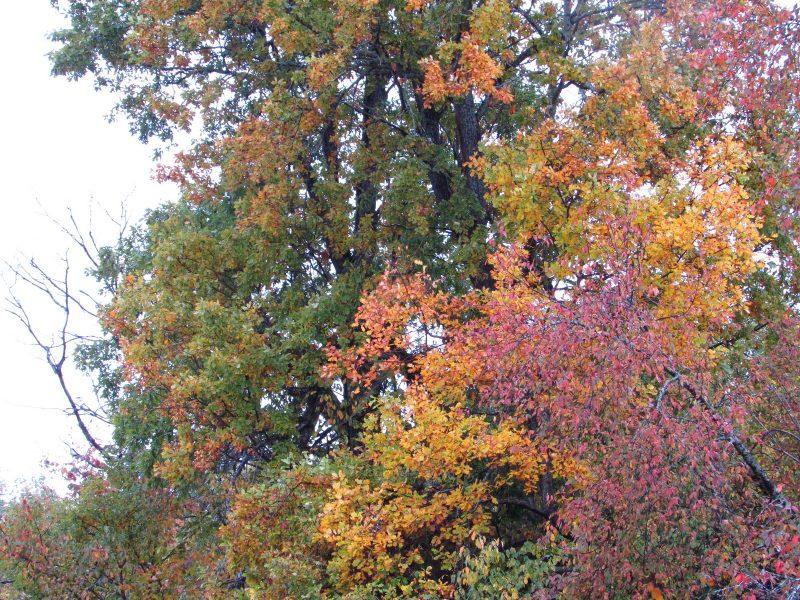 Осенние наряды. Фото Е.В. Рогожниковой