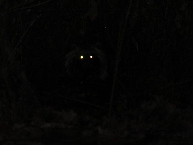 Ночная охотница. Фото С. В. Бакки