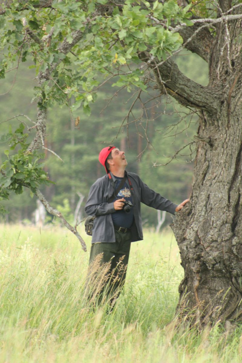 Гигантский дуб. Фото Двининой Г. Г.