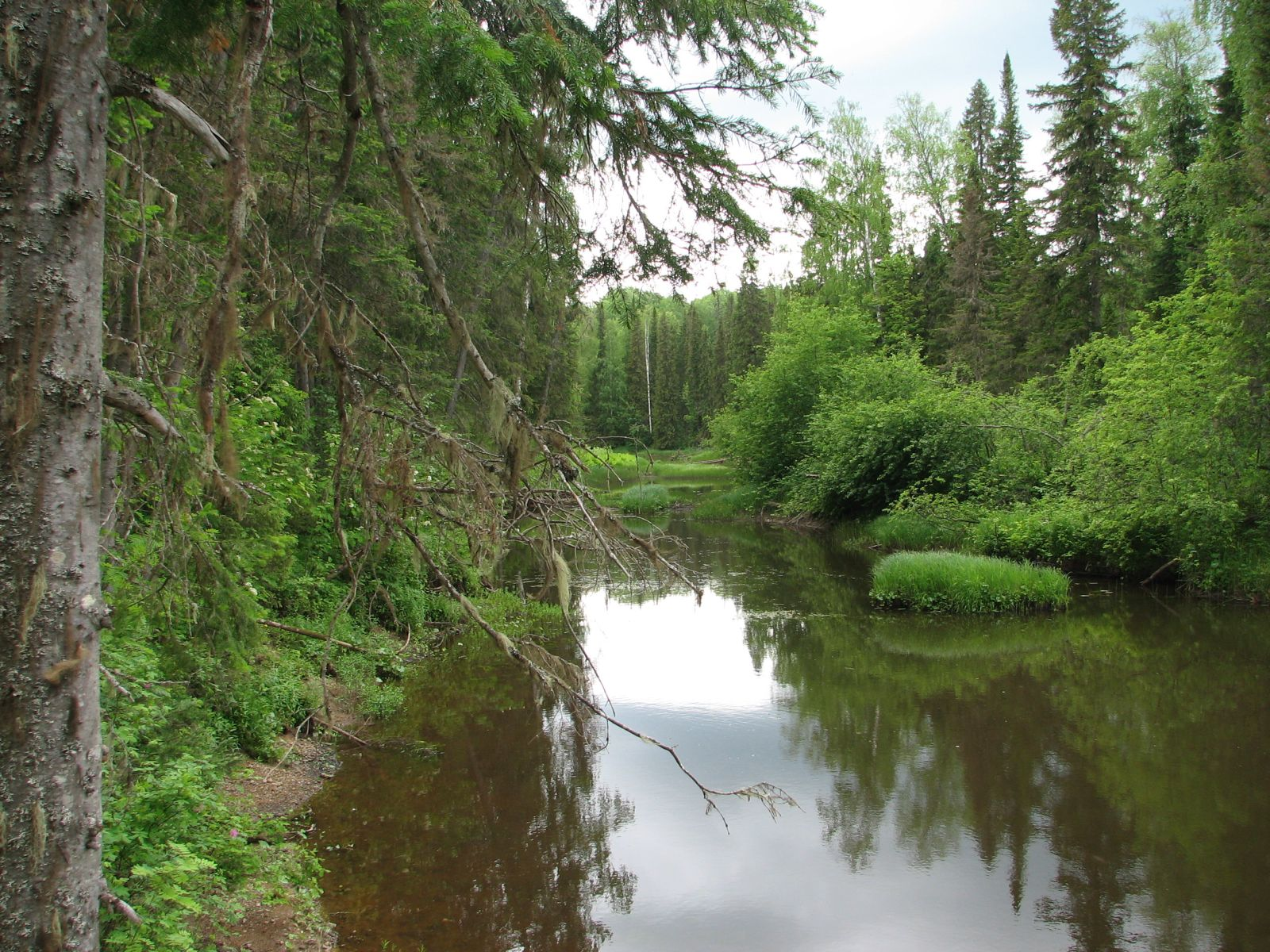 Река Федоровка в Тулашоре. Фото В. М. Рябова