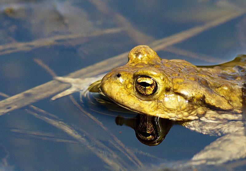 Лягушка Фото А. А. Широких