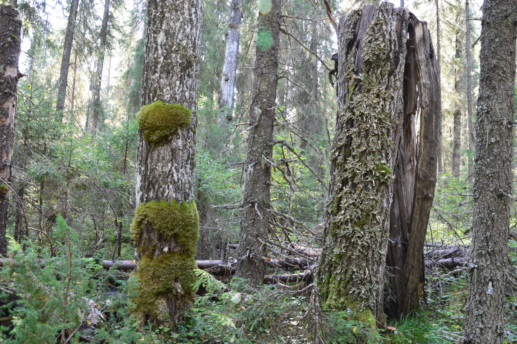 Таёжный лес Тулашора. Фото Е. П. Лачоха