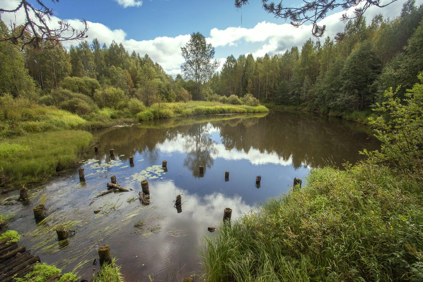Река Федоровка. Фото А. А. Широких