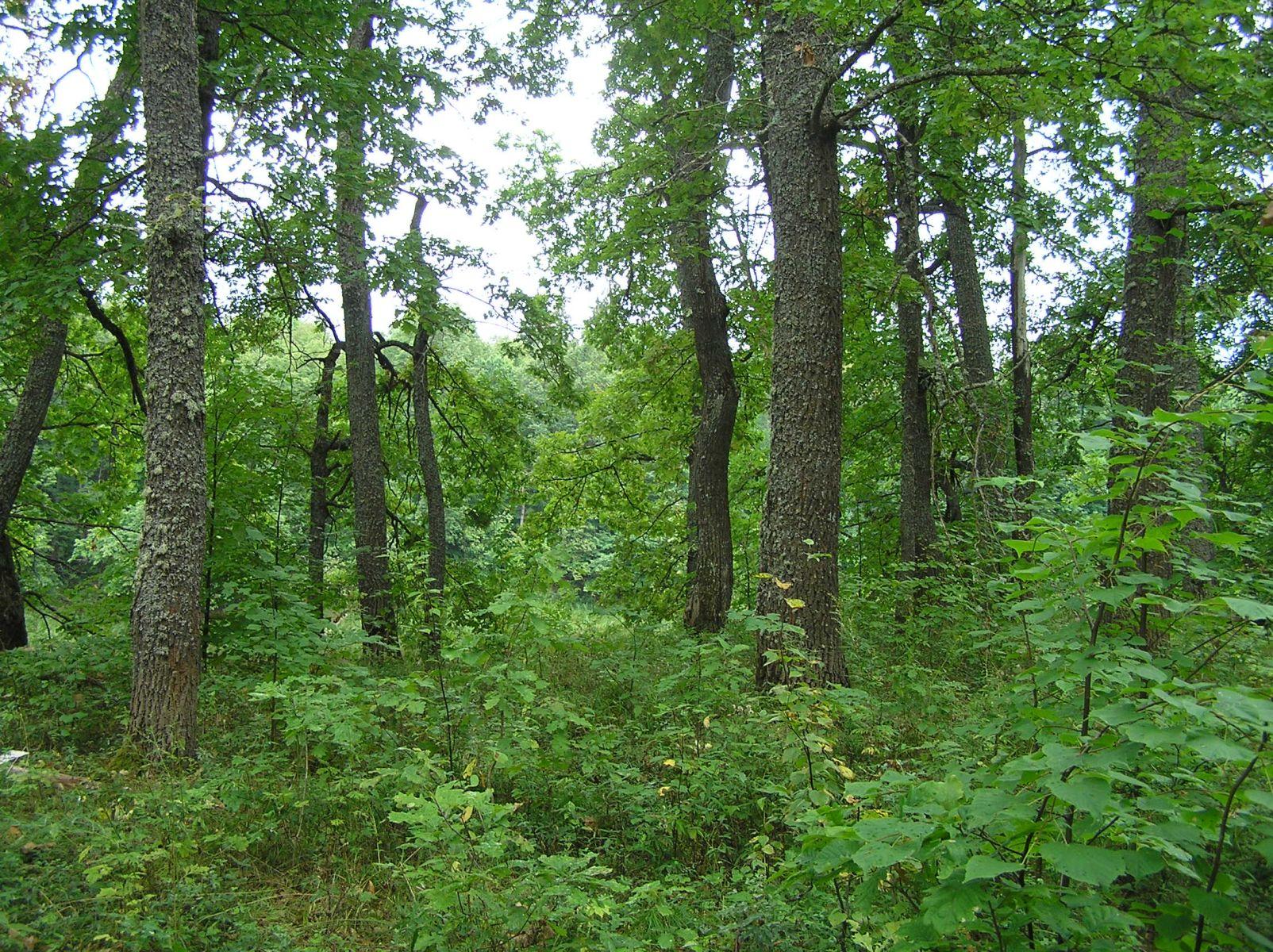 Широколиственный лес Нургуша. Фото Л.Г. Целищевой