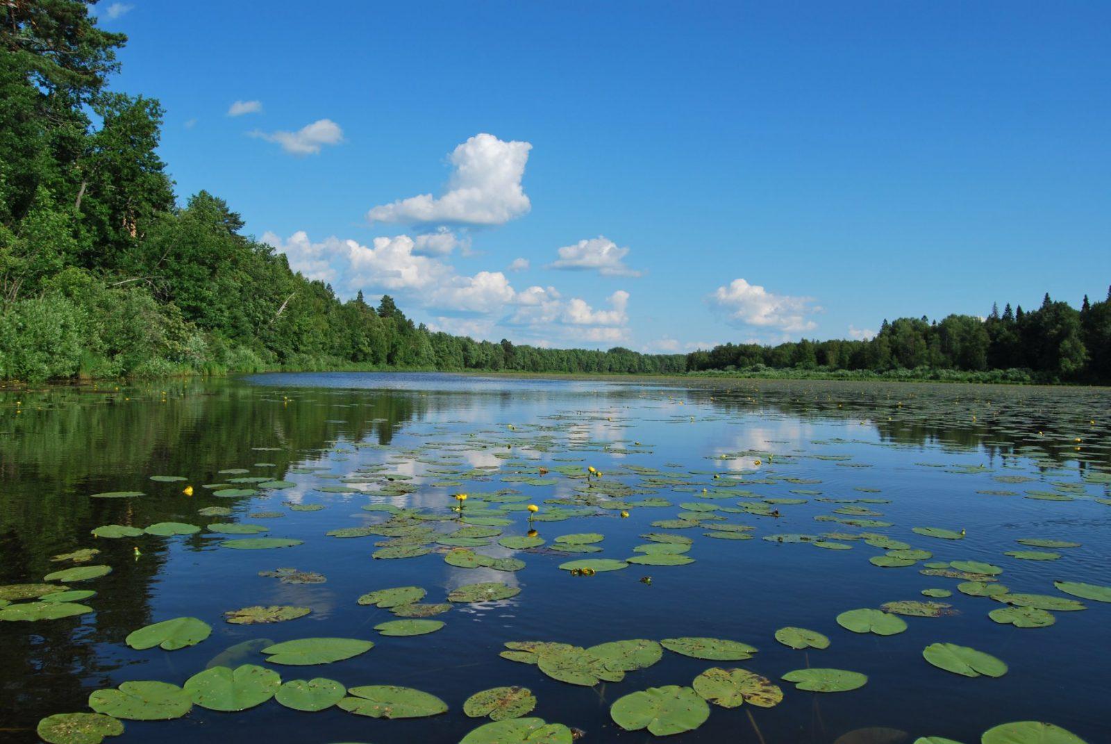 Выставка Голубые озёра - Лето на озере Кривое. Фото Н. Н. Ходырева